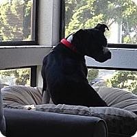 Adopt A Pet :: Loreal - San Diego, CA