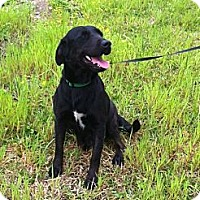 Labrador Retriever Mix Dog for adoption in Baton Rouge, Louisiana - Mamma Dog