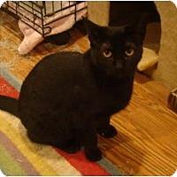 Adopt A Pet :: Rosa - Muncie, IN
