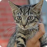 Adopt A Pet :: Willa - Brooklyn, NY