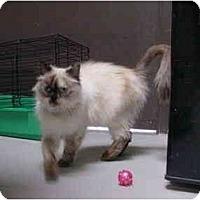 Adopt A Pet :: Brandi - Davis, CA