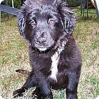 Adopt A Pet :: Mr Milo - Staunton, VA