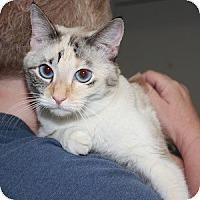 Adopt A Pet :: Kaylee - Phoenix, AZ