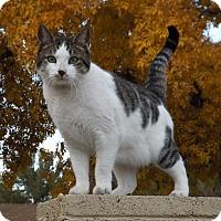 Adopt A Pet :: Jessica - Mesa, AZ