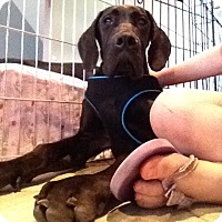 Adopt A Pet :: Dane-elle - Stevens Point, WI
