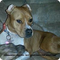 Adopt A Pet :: **PF - Nala - Wyoming, MI