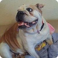 Adopt A Pet :: Lola - Santa Ana, CA