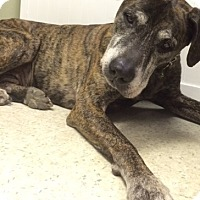 Adopt A Pet :: TYSON - bath, ME