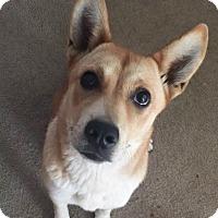 Adopt A Pet :: Jolene - Memphis, TN
