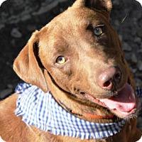 Adopt A Pet :: SID - DeLand, FL