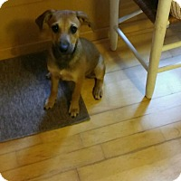 Adopt A Pet :: Bishop meet me 9/16 - Manchester, CT