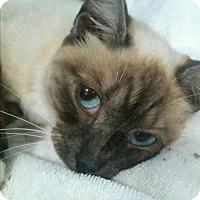 Adopt A Pet :: DESTINY - Powder Springs, GA