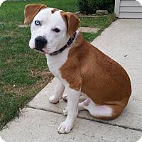 Adopt A Pet :: Cooper - joliet, IL