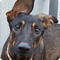 Adopt A Pet :: Rizzo - Bloomington, IL