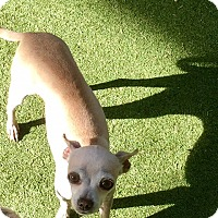 Adopt A Pet :: Eleanor - Henderson, NV
