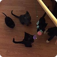 Adopt A Pet :: Phelps - Glendale, AZ