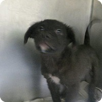 Adopt A Pet :: Lee - Murphysboro, IL