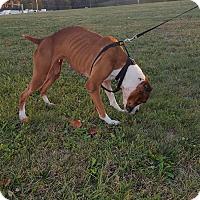 Adopt A Pet :: Keena - Freedom, PA