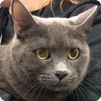 Adopt A Pet :: Sadie 0521 - Columbus, GA