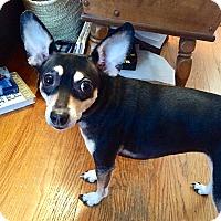 Adopt A Pet :: Zora - House Springs, MO