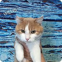 Adopt A Pet :: Wyllis - Hibbing, MN