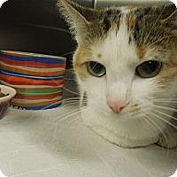 Adopt A Pet :: Pixie - Medina, OH