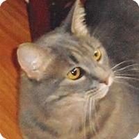 Adopt A Pet :: Kitty - Bradenton, FL
