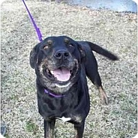 Adopt A Pet :: Beauty - Kaufman, TX
