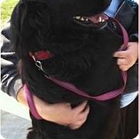 Adopt A Pet :: ESPN - Denver, CO