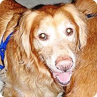 Adopt A Pet :: Luke - Murdock, FL
