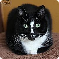 Adopt A Pet :: Matthew - Lancaster, MA