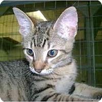 Adopt A Pet :: Dot - Mission, BC