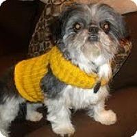 Adopt A Pet :: Jackie - Shawnee Mission, KS