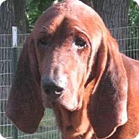 Adopt A Pet :: Zeke - Jacksonville, FL