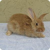 Adopt A Pet :: Parker - Bonita, CA