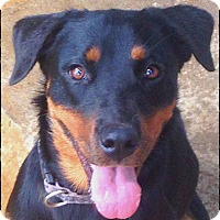Adopt A Pet :: Nera - Johnson City, TX