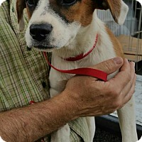 Adopt A Pet :: Lulu - Albemarle, NC