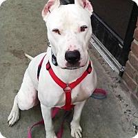 Adopt A Pet :: Aurora - Indianapolis, IN