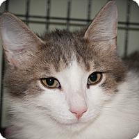 Adopt A Pet :: Dawson - Hamilton, ON