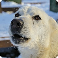 Adopt A Pet :: Solo - Jefferson, NH