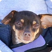 Adopt A Pet :: Beckee - Henderson, NV