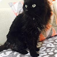 Adopt A Pet :: Noelle - Addison, IL