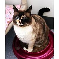 Adopt A Pet :: Shasta - Bellevue, WA