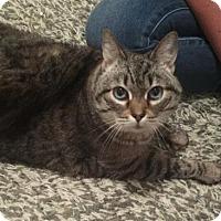 Adopt A Pet :: Chelsea - Nashville, TN