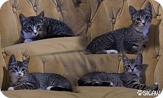 cat scratch show