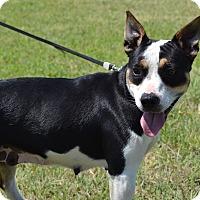 Adopt A Pet :: BooBoo - Larned, KS