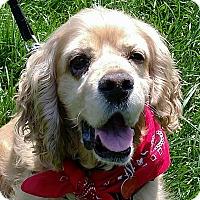 Adopt A Pet :: Parker - Newington, VA