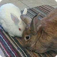 Adopt A Pet :: Dennis - Woburn, MA