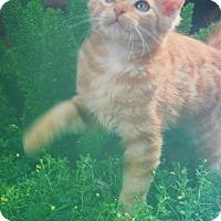 Adopt A Pet :: Morrison - Homewood, AL