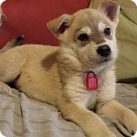 Adopt A Pet :: Macy - Saskatoon, SK